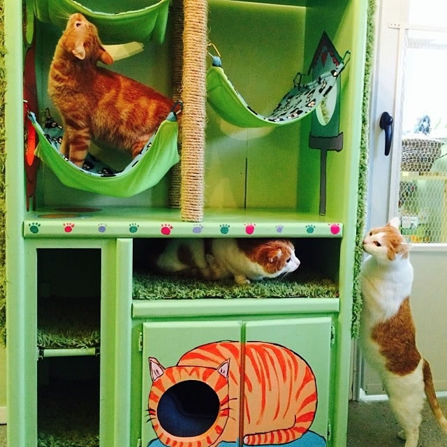 Keep Shop Cats Safe and Cozy in this DIY Cat Hotel