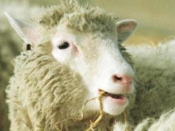 dolly-the-sheep