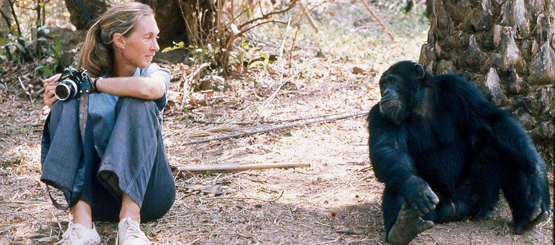 July 14, 1960: Jane Goodall Begins Her Study of Chimpanzees