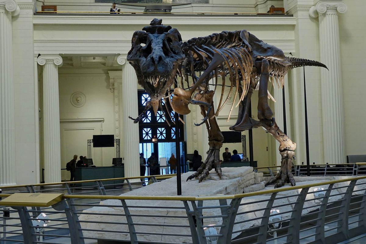August 12, 1990: The Largest, Most Complete T-Rex Skeleton is Found
